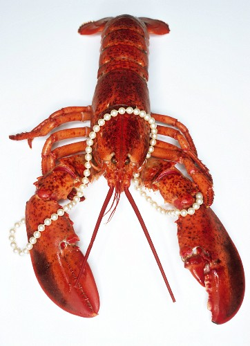 Cooked lobster with string of pearls