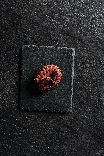 An octopus tentacle on a stone slab (seen from above)