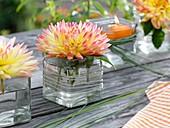 Dahlienblüte im viereckigen Glas