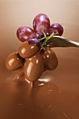 Dipping grapes in melted chocolate