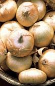 Vidalia Onions in Basket