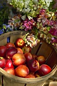 Nectarines in chip basket in front of flowers