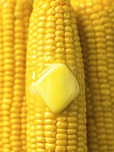 Hot Buttered Corn Cobs; Close Up