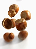 Falling hazelnuts