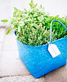 Fresh herbs in a blue basket.