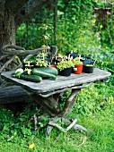 A table in a garden, Sweden.