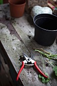 Empty plastic plant pot and secateurs on rustic wooden table