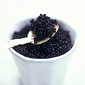 Black caviare in a cup and on tortoiseshell spoon