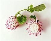 Kaufen sie bilder zum thema foodschnitzerei - Gurken dekorativ schneiden ...