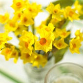 Vase of yellow narcissi on Easter table