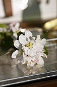 Apple blossom on metal box