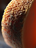 Mimolette (hardchese from France), close-up