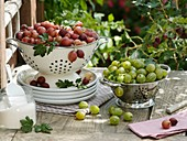 Red and green gooseberries in colanders