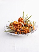 Sea buckthorn berries in dish