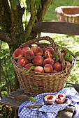 A basket of peaches under a tree