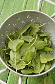 Freshly washed spinach in colander
