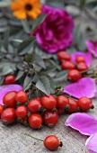 Hagebutten und Herbstblumen