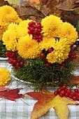 Herbstliches Gesteck aus Chrysanthemen, Moos und Beeren
