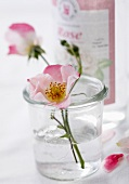 Wild roses in a glass of water