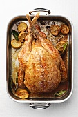 Roast turkey with lemon in roasting tin (overhead view)