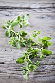 Fresh marjoram on a wood background