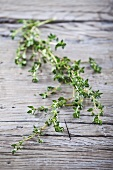 Fresh thyme on a wood background