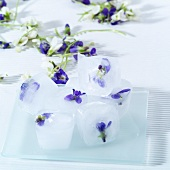 Ice cubes with violets