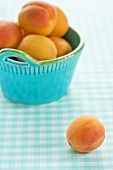 Apricot with a Bowl of Apricots on Blue Checked Table