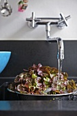 Lettuce leaves in colander under running water