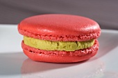 Rose macaroon with pistachio cream
