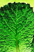A cabbage leaf