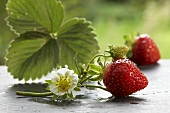 Fresh strawberries with flower and leaf