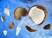 A coconut falling into water