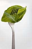 Basil leaf on fork