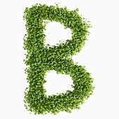The letter B in cress