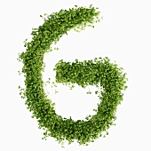 The letter G in cress