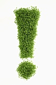 ! (exclamation mark) in cress