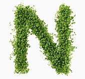 The letter N in cress