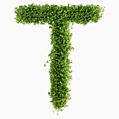 The letter T in cress