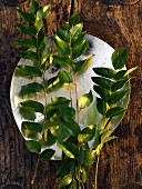 A plate of fresh curry leaves (seen from above)
