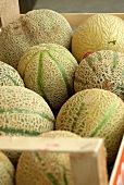Galia melons in a wooden crate