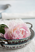 Old casserole dishes and pink peony
