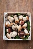 Fresh porcini mushrooms in a crate