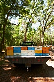 Many Bee Hives on the Back of a Pickup Truck