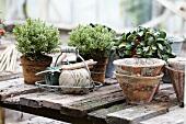 Rustikaler Tisch mit Herbstpflanzen, Drahtkorb und Terrakottatöpfe