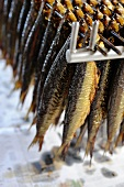 Smoked herring on a rack (Bornholm, Denmark)
