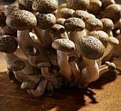 Shimeji mushrooms on wooden background
