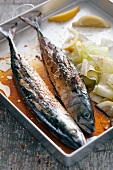 Grilled mackerel with vegetables