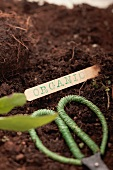 A label with the word 'organic' and herb scissors in soil