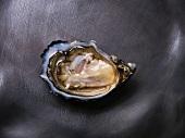 A pousses en claire oyster